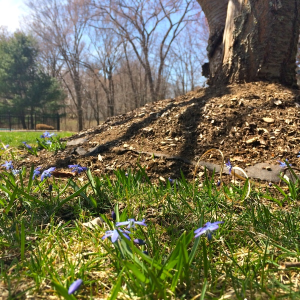 Notes by Natalie, Signs of Spring